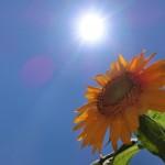 食べて日焼け止め!紫外線から肌を守るおすすめ食材