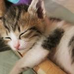 睡眠は最高の美容法!質を上げるために寝る前にやっておくべきこと