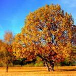 秋こそスキンケアに力を入れて美肌に近づこう